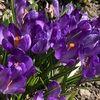 purplemoda